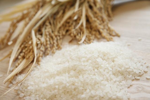稲穂と精米されたお米